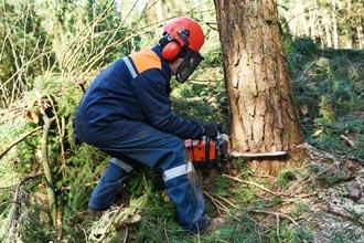 Veszélyes fakivágás, alpin favágás - The Tree Comapny kft.